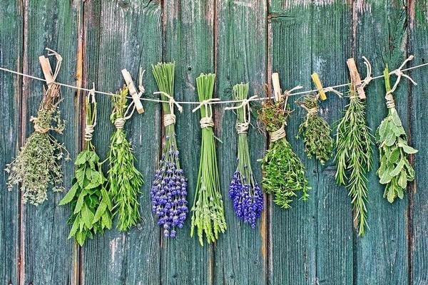 Piante, piante delle mie brame...